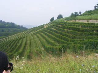 Gaja_vineyards_2
